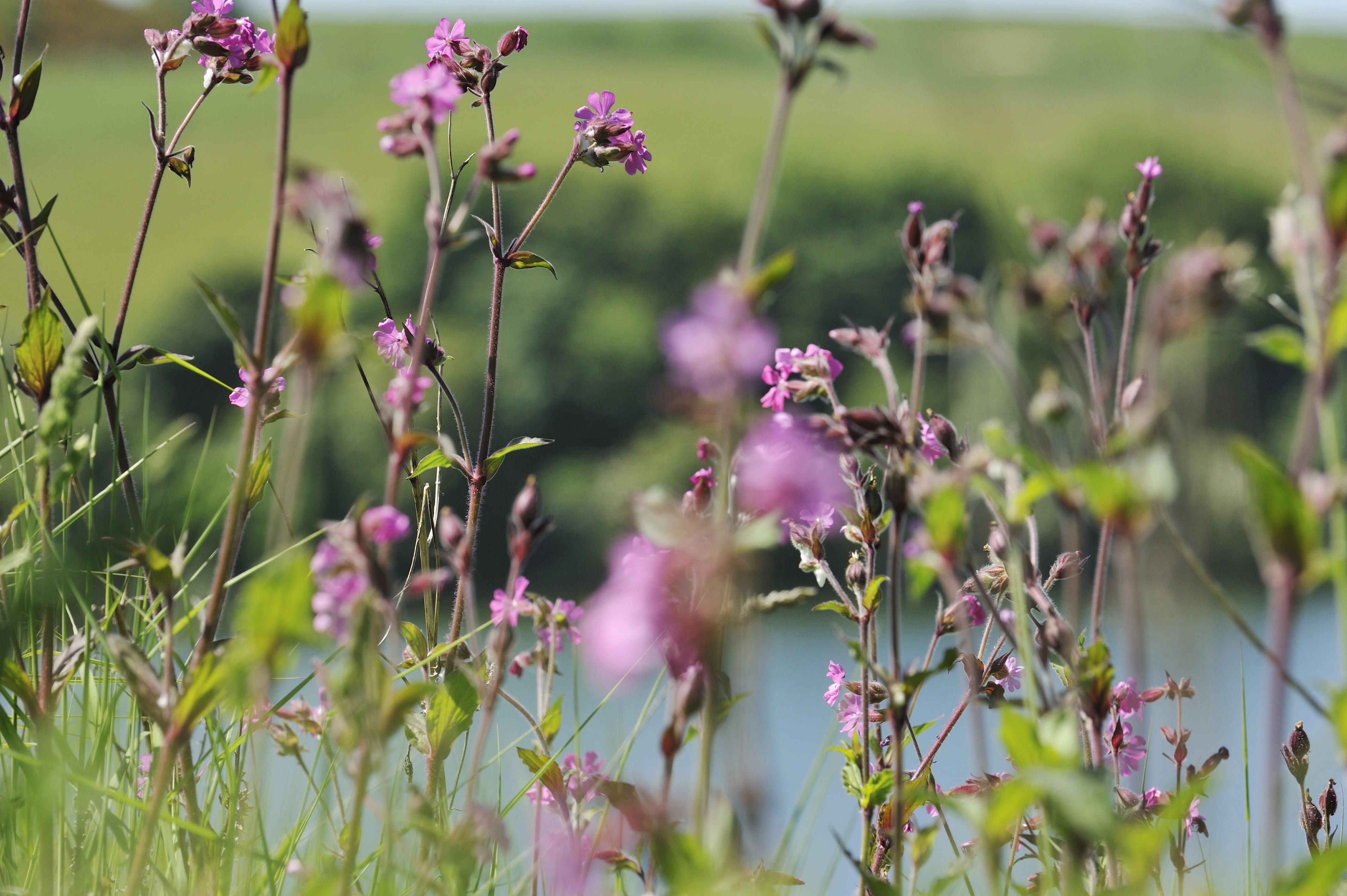 kcla flowers